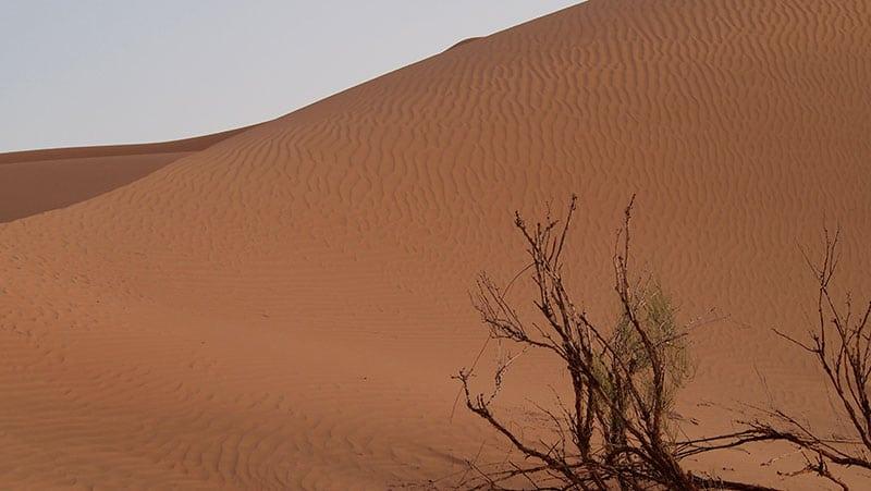 The Oman Empty Quarter - Rub' Al Khalif - sprigs of growth