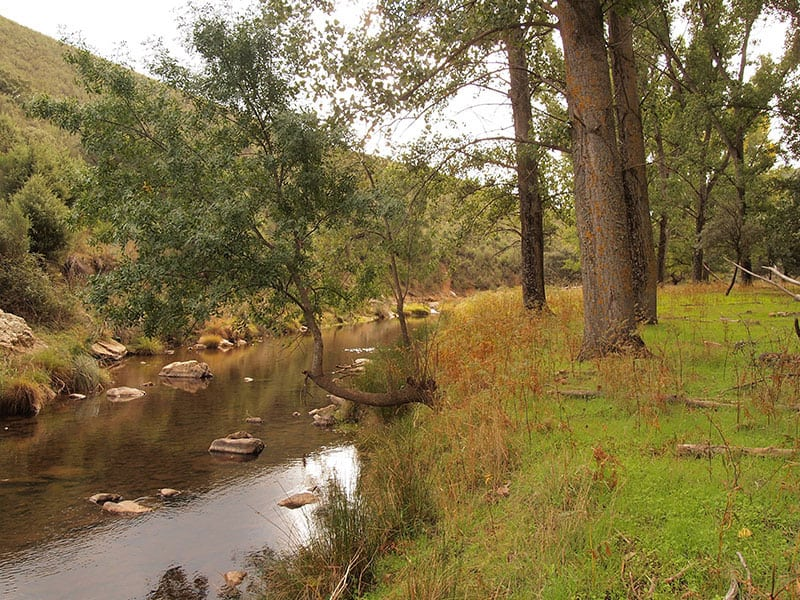 spain_extremadura_goat_horn_river_walk_meadow