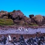 Penguins of Patagonia