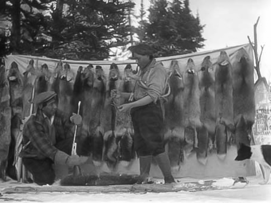Edward Jack of Atlin and George Johnston with pelts 1920